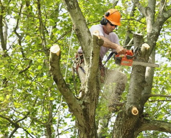 Tree Trimming Program